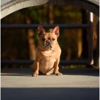 Atlanta Athens Best Dog Pictures Portraits Pet Photographer Georgia 0001 200x200 Portfolio