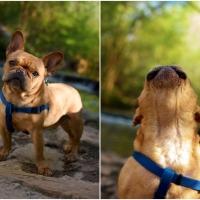 Atlanta Athens Best Dog Pictures Portraits Pet Photographer Georgia 0002 200x200 Portfolio