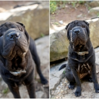Atlanta Athens Best Dog Pictures Portraits Pet Photographer Georgia 0003 200x200 Portfolio