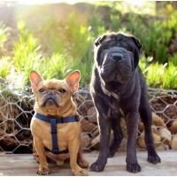 Atlanta Athens Best Dog Pictures Portraits Pet Photographer Georgia 0004 200x200 Portfolio