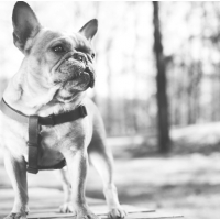 Atlanta Athens Best Dog Pictures Portraits Pet Photographer Georgia 0006 200x200 Portfolio