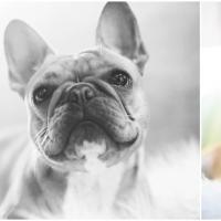 Atlanta Athens Best Dog Pictures Portraits Pet Photographer Georgia 0031 200x200 Portfolio