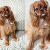 Atlanta Athens Best Dog Pictures Portraits Pet Photographer Georgia 0033 200x200 Portfolio