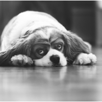 Atlanta Athens Best Dog Pictures Portraits Pet Photographer Georgia 0034 200x200 Portfolio