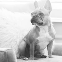 Atlanta Athens Best Dog Pictures Portraits Pet Photographer Georgia 0035 200x200 Portfolio