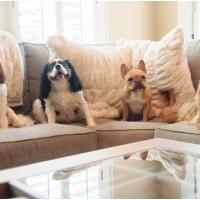 Atlanta Athens Best Dog Pictures Portraits Pet Photographer Georgia 0041 200x200 Portfolio