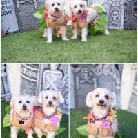 Atlanta Athens Best Dog Pictures Portraits Pet Photographer Georgia 0045 200x200 Portfolio