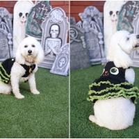 Atlanta Athens Best Dog Pictures Portraits Pet Photographer Georgia 0047 200x200 Portfolio