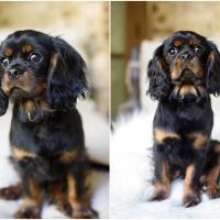 Atlanta Athens Best Dog Pictures Portraits Pet Photographer Georgia 0051 200x200 Portfolio